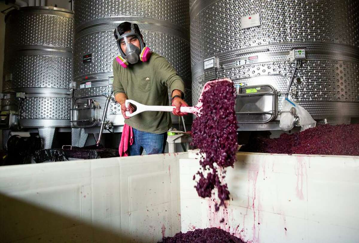 Left: Perez works to drain a fermentation tank and separate the skins earlier than usual at Castello di Amorosa in hopes of avoiding contamination from smoke.