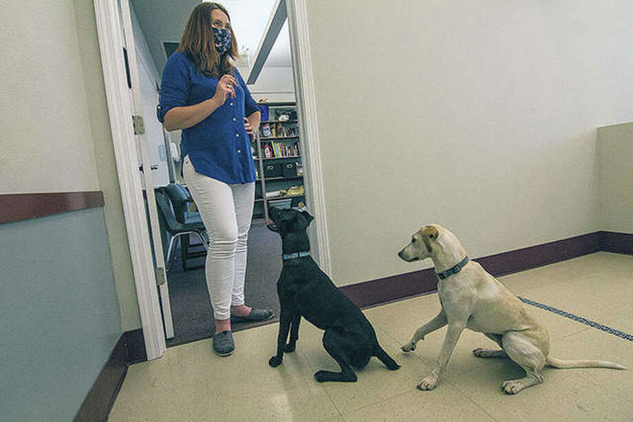 Illinois Wesleyan University associate psychology professor Ellen Furlong gets the attention of 1-year-old dogs Bruno and Ella in the college's dog sciences lab in Bloomington. Photo: Lewis Marien | The Pantagraph (AP)