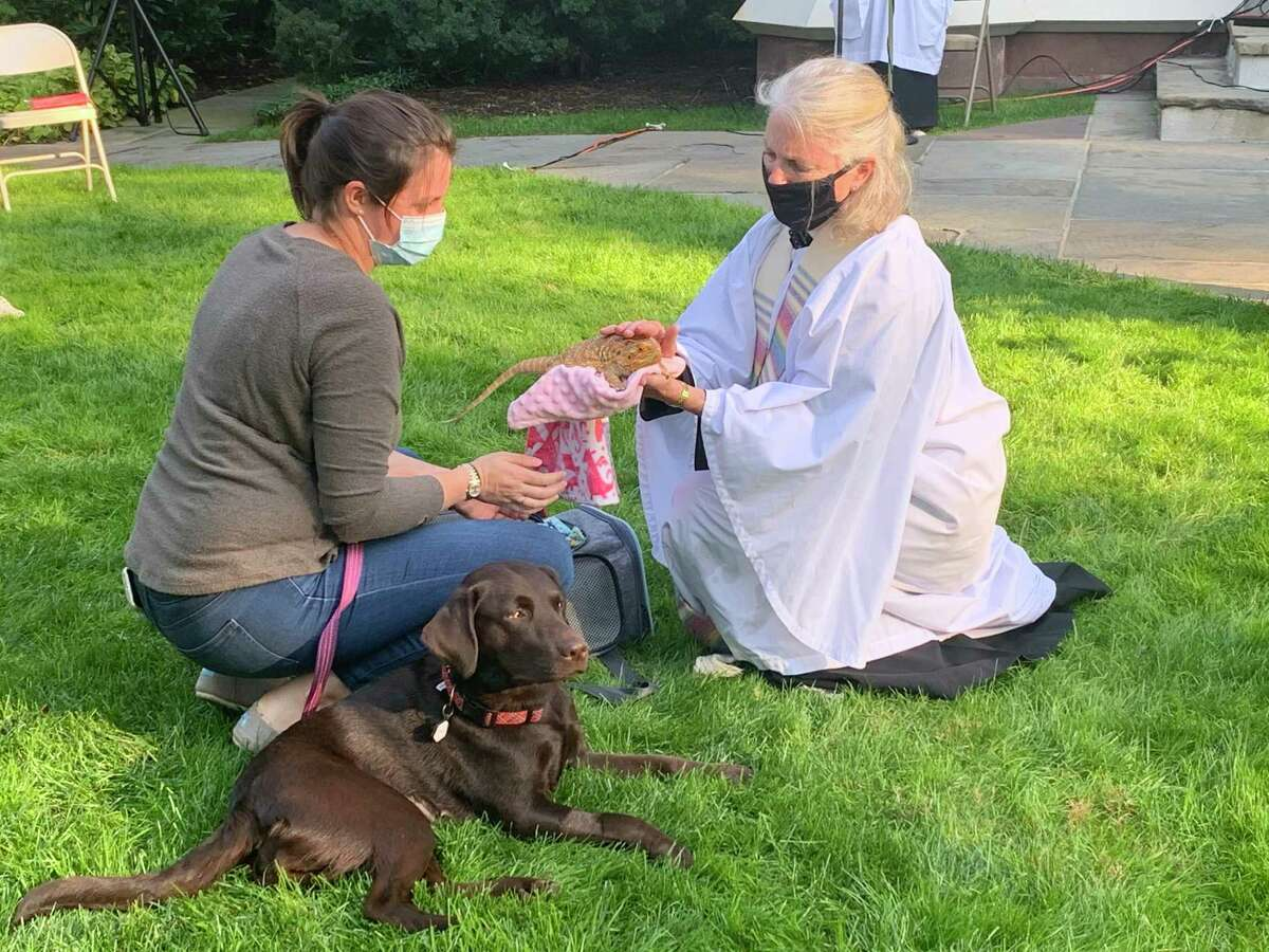 While her owner, Addie Schoen, looks on, the Rev. Peggy Hodgkins blesses bearded dragon Jax during the Blessing of the Animals Sunday, Oct. 4, at Trinity Episcopal Church in Southport. In the foreground is Roary, and Winnie, another bearded dragon is in a carrier, already blessed.