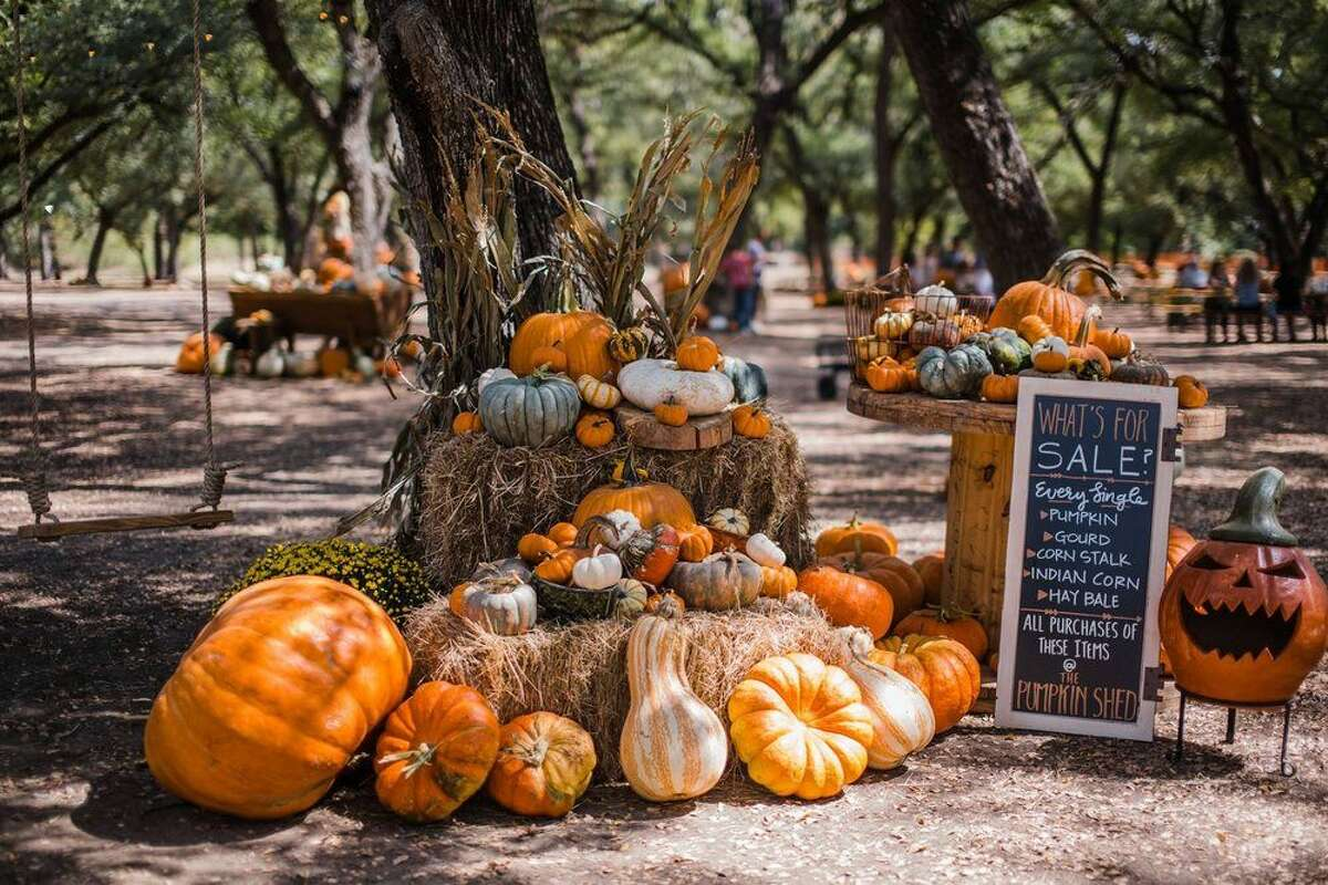 Visit the Comal River and choose that perfect pumpkin for your Halloween jack-o'-lantern.