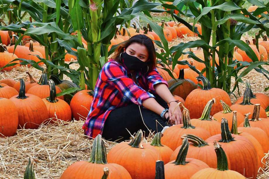 With the fall comes pumpkins, and Jones Family Farms in Shelton officially kicked off the gourd gathering season on Sept. 26. Those planning to attend are asked to make reservations on the farms' website. Picking hours are weekdays, 10 a.m. to 5:30 p.m., and Saturday and Sunday from 9 a.m. to 5:30 p.m. Photo: Vic Eng / Hearst Connecticut Media / Connecticut Post