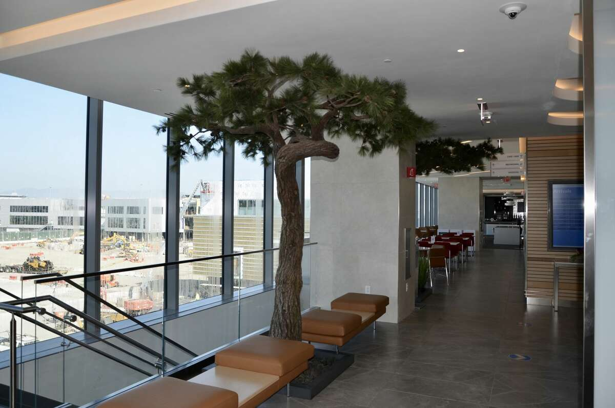 The bonsai pines that were a frequent flier favorite in the old Terminal 2 Admirals Club have been planted in the new Terminal 1 lounge.