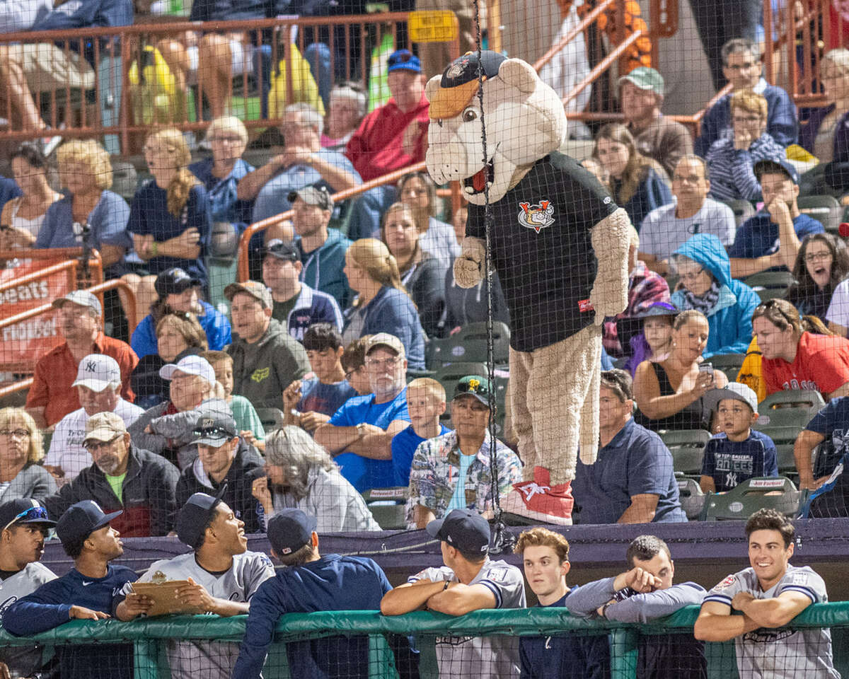 Southpaw, the ValleyCats mascot, at the team's Not So Scary Halloween promotion in 2019. Tri-City will host a Halloween-themed Fall Festival on Oct. 16 & 17, 2020. (Jim Franco/Special to the Times Union)