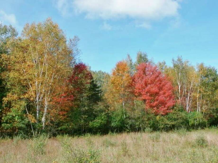 Fall color at the west gate of McLean Nature Preserve in Bay County. (Photo provided/McLean Nature Preserve)