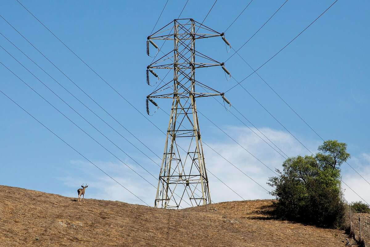 A deer walks through dry grass beneath high voltage power lines seen from Terrace Drive in El Cerrito in September.
