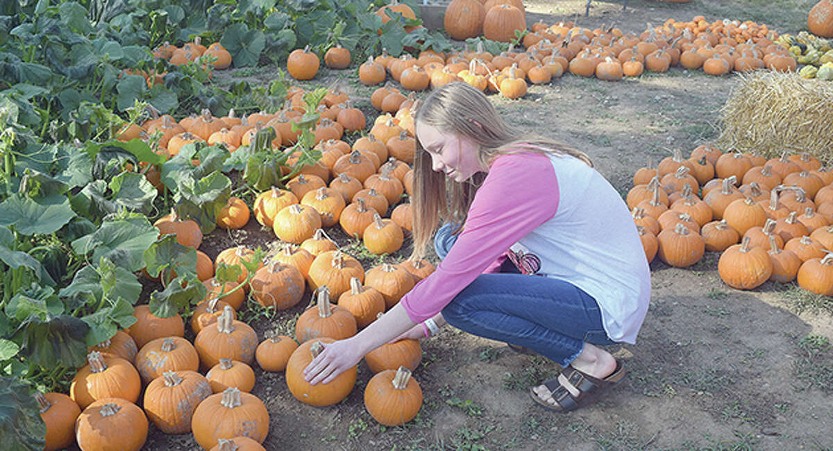 Addy Blimling, 14, checks out the pumpkins at Keithley Farms. Addy has been raising money for the Mia Ware Foundation by selling bracelets. She will be selling her bracelets this weekend at the farm.