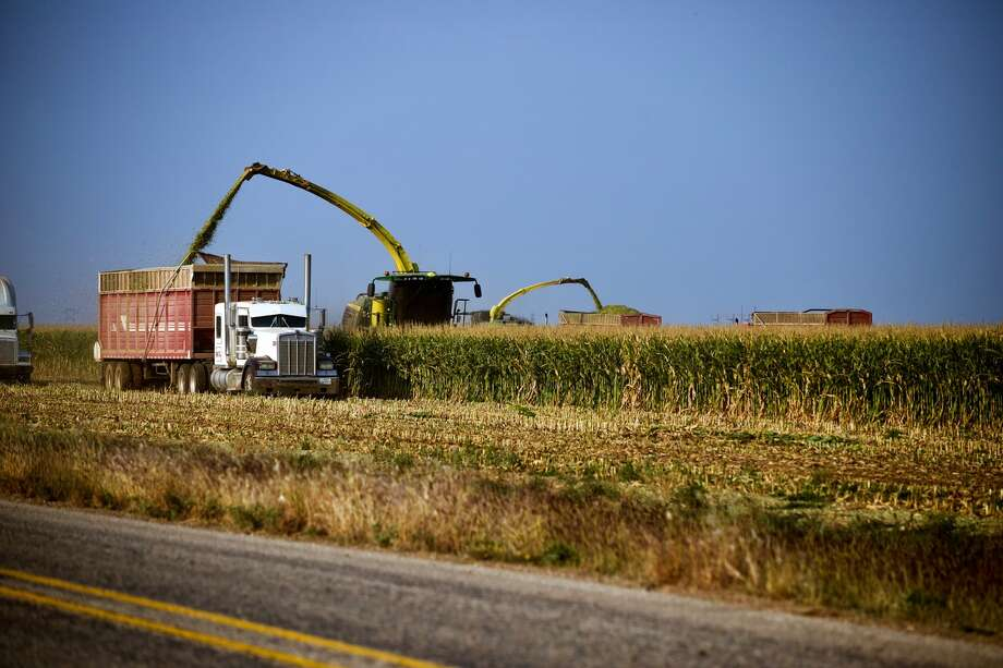 Farmers begin cutting corn for silage to go to an area feedlot across from the six point elevator on Tuesday, Oct. 9, 2020. Photo: Don Brown/For The Herald