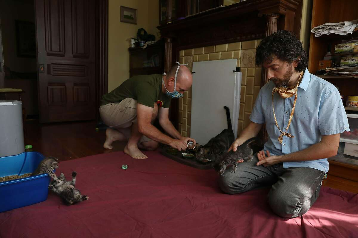 Daniel Schweitzer (right), state bar tutor, and spouse Jeff Patterson (left) care for their 5 foster kittens and cat before Schweitzer has a tutoring session with a client from their home on Wednesday, September 16, 2020 in San Francisco, Calif.