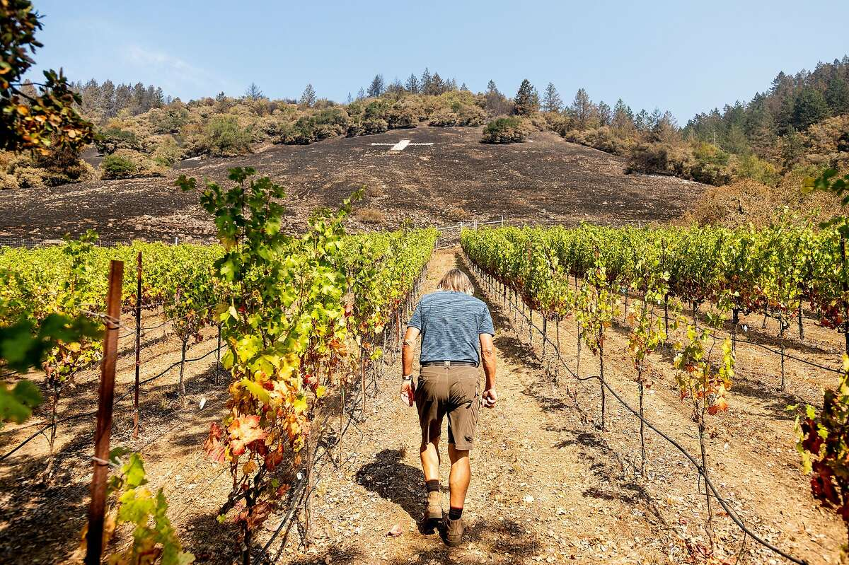 Bjarne Hansen walks through his vineyard on Tuesday. The Glass Fire scorched the hillside above his property on Sept. 27.