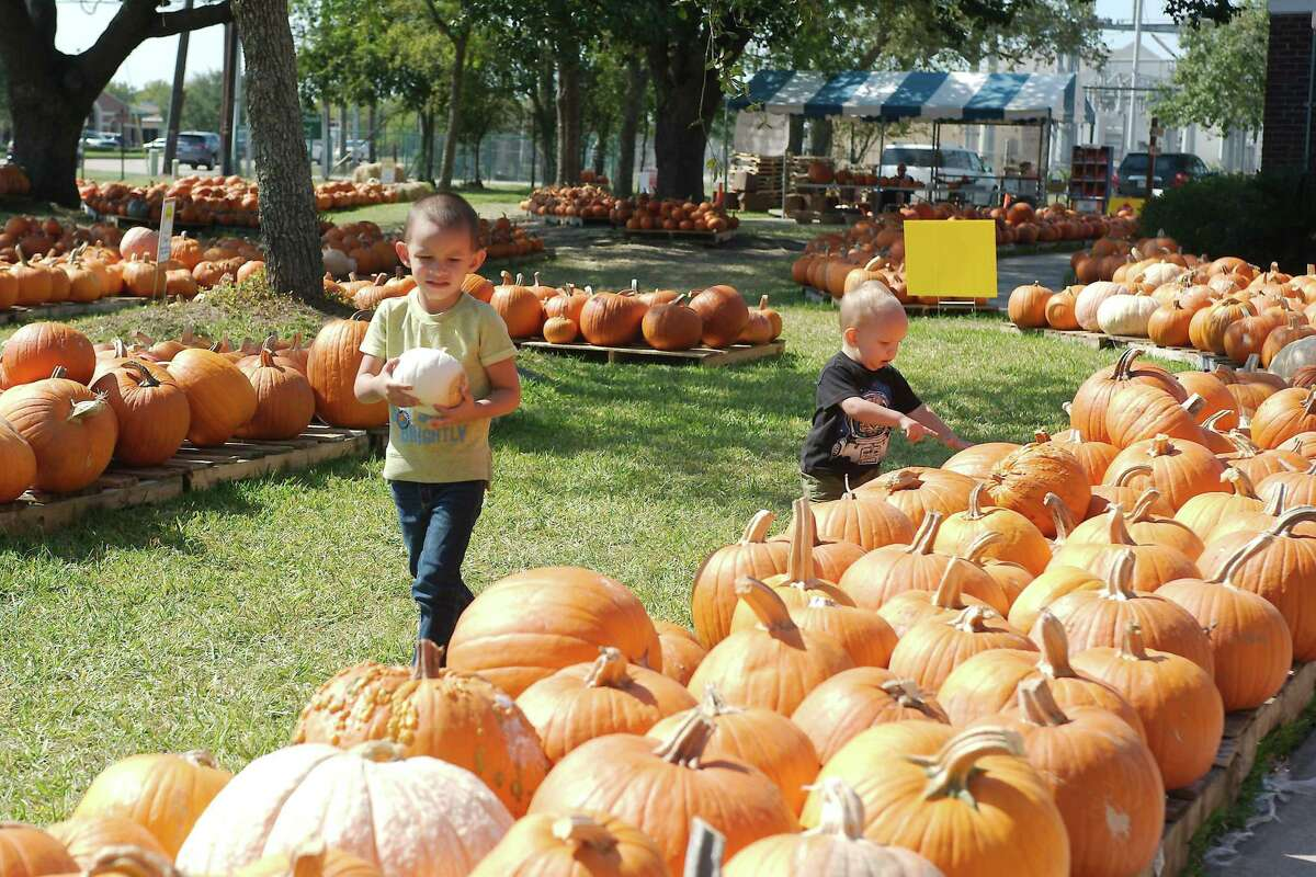 Winston and Wyatt Fletcher look over the pumpkins available for purchase at St. Andrew's Episcopal Church in Pearland.