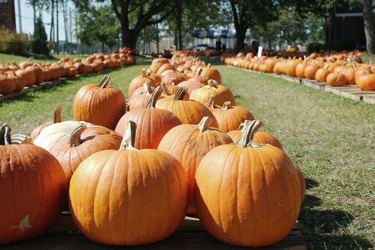 Rows of pumpkins are available for purchase at the pumpkin patch at St. Andrew's Episcopal Church.