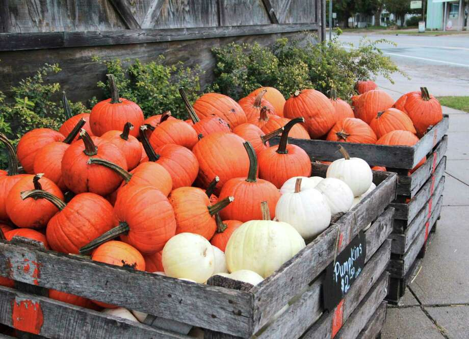 As the air crisps and leaves begin to fall, area businesses are decorating their establishments with festive fall attire. These vivid, and perfectly placed, orange pumpkins line the Reed City Feed and Supply. (Pioneer photo/Alicia Jaimes)