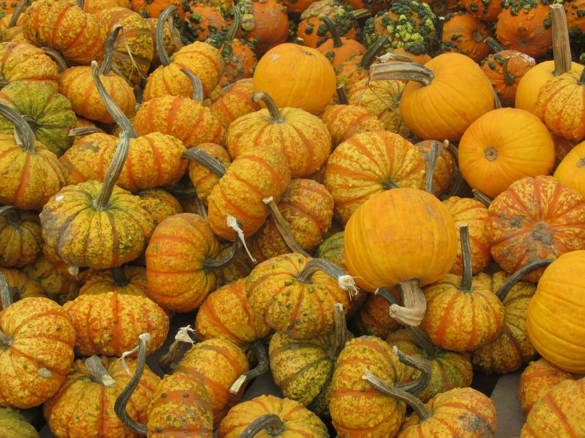 This pretty pile of pumpkins was on display at the Golden Harvest Farms in Valatie on a recent visit. Along with pumpkins, we came home with pies, donuts, apples and cider. A perfect fall haul, says Stephanie Perry of Rensselaer.