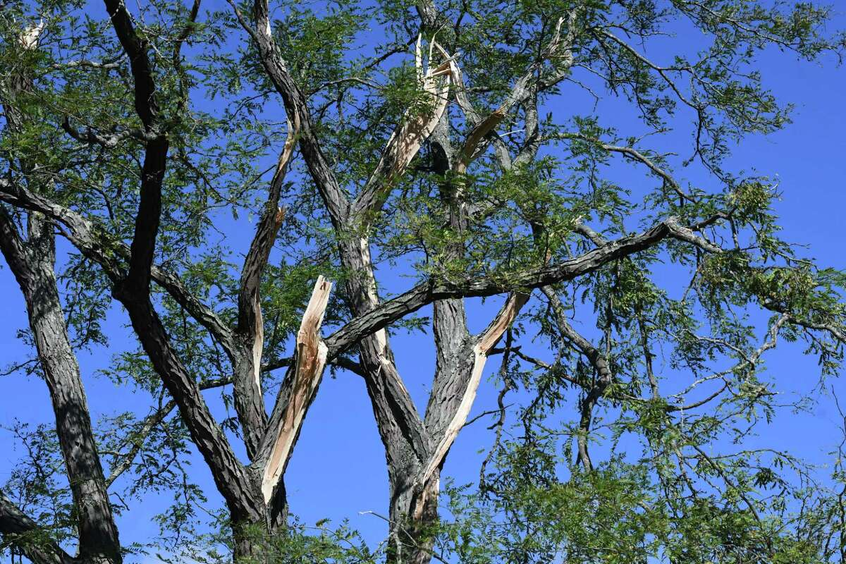 Tree limbs where ripped from its trunk during Wednesday's storm along Elm Avenue between Route 32 and Feura Road on Thursday, Oct. 8, 2020, in Bethlehem, N.Y. Strong winds from a fast moving storm on Wednesday evening took down trees caused damage throughout the Capital Region. (Will Waldron/Times Union)