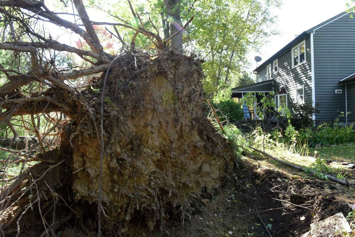 A large pine tree in an Elm Avenue resident's backyard was toppled by Wednesday's storm on Thursday, Oct. 8, 2020, in Bethlehem, N.Y. Strong winds from a fast moving storm on Wednesday evening took down trees caused damage throughout the Capital Region. (Will Waldron/Times Union)