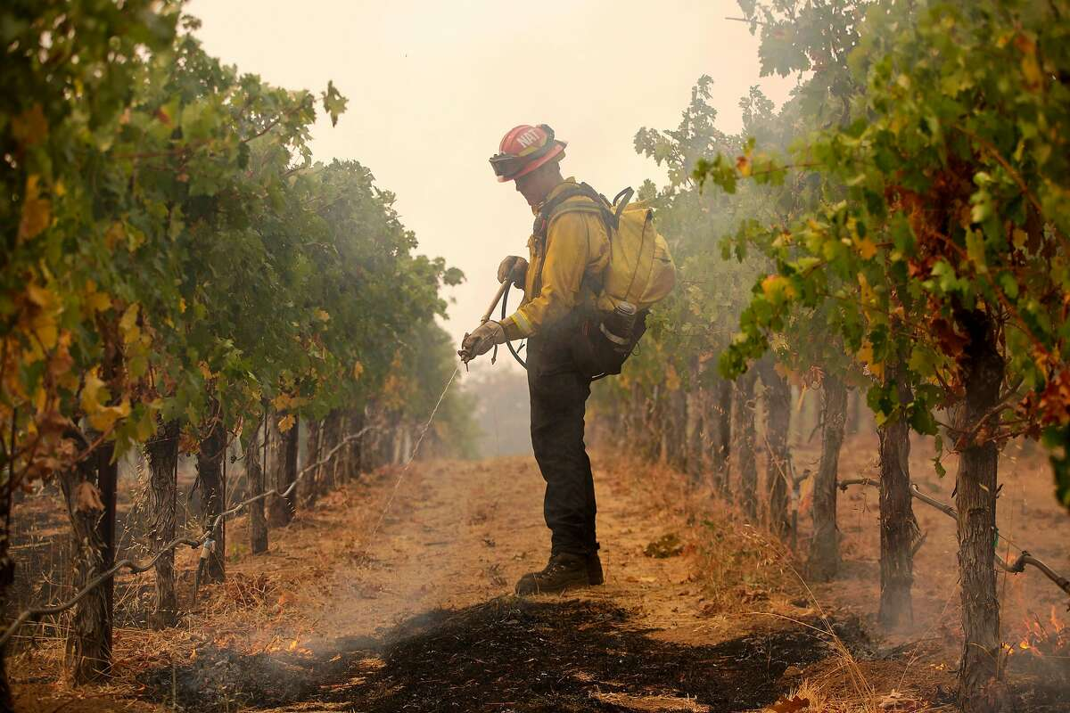 National City fire Capt. James Stiles sprays down small spot fires in the vines at Robert Craig Winery in Angwin during the still-raging Glass Fire.
