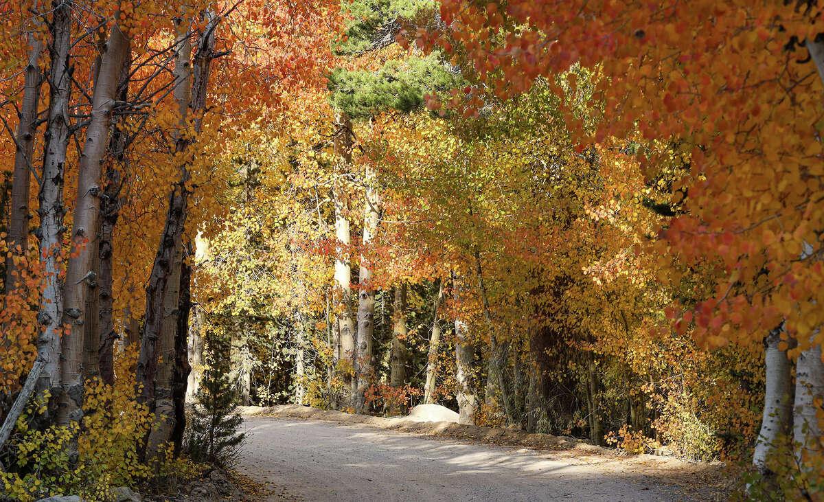 The colors along North Lake Road near Bishop Creek Canyon on Oct. 3, 2020.