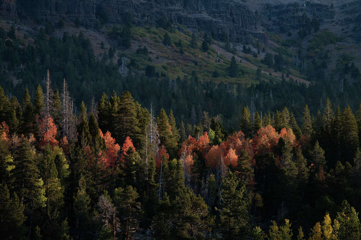 Red colors peek out at Vermillion Grove at Caples Lake along Highway 88 on Oct. 5, 2020.