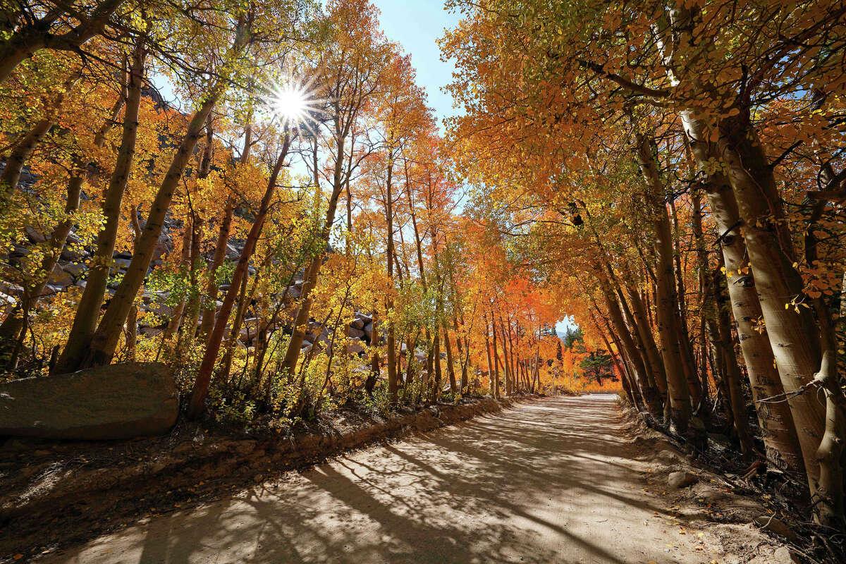 Fall colors emerge along North Lake Road of Bishop Creek Canyon on Oct. 3, 2020.