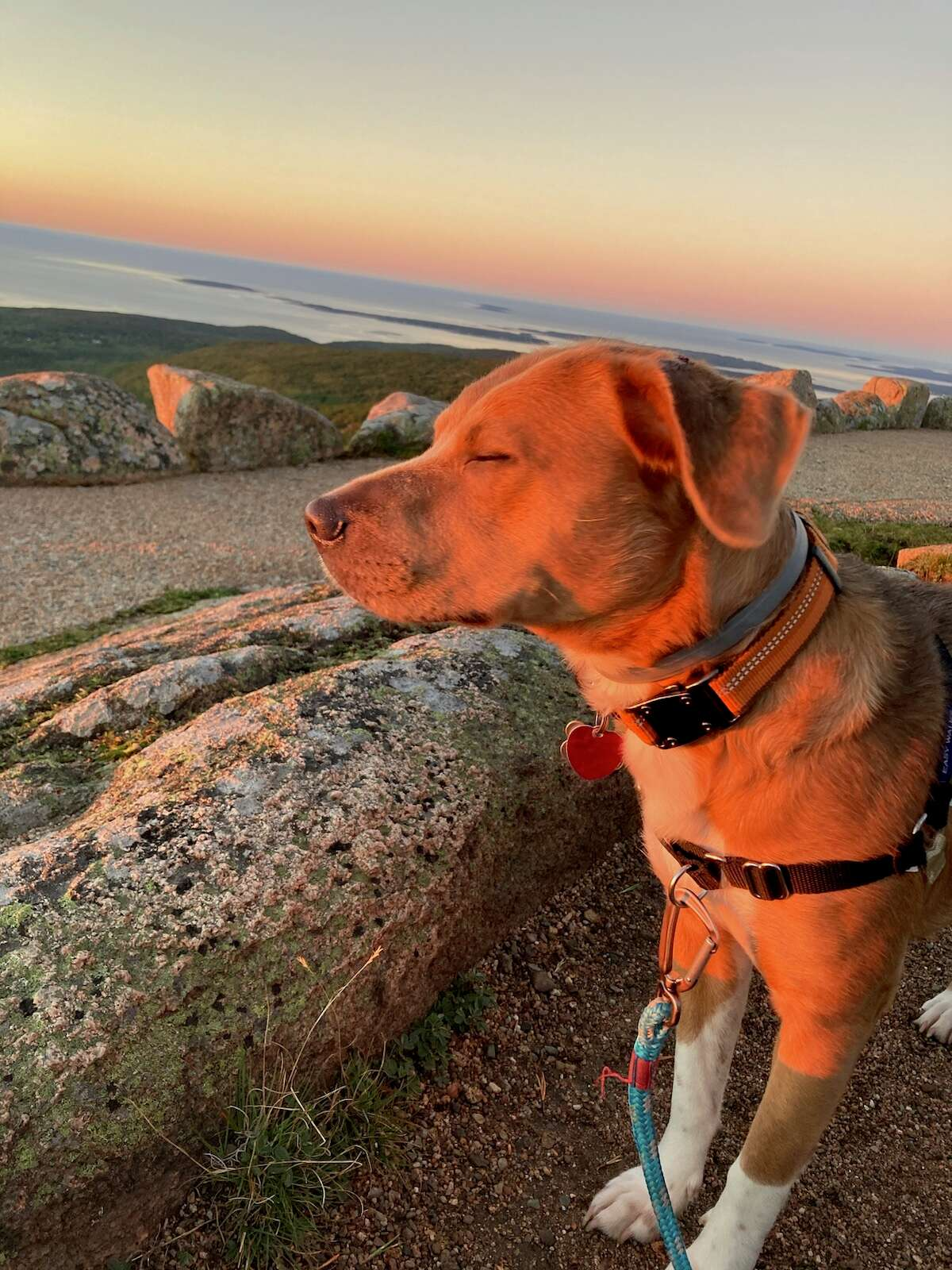 Rick Eckhardt's daughter Janet took this photo of Athena soaking up the sunrise on Cadillac Mountain in Acadia National Park in early September.