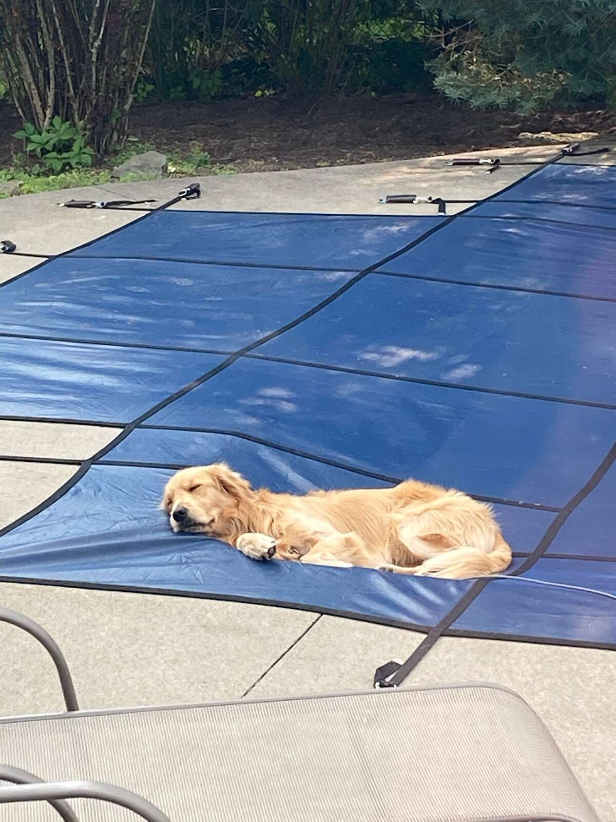 Brewster soaks up the last of the summer rays in late September in this photo from Lisa Taub.