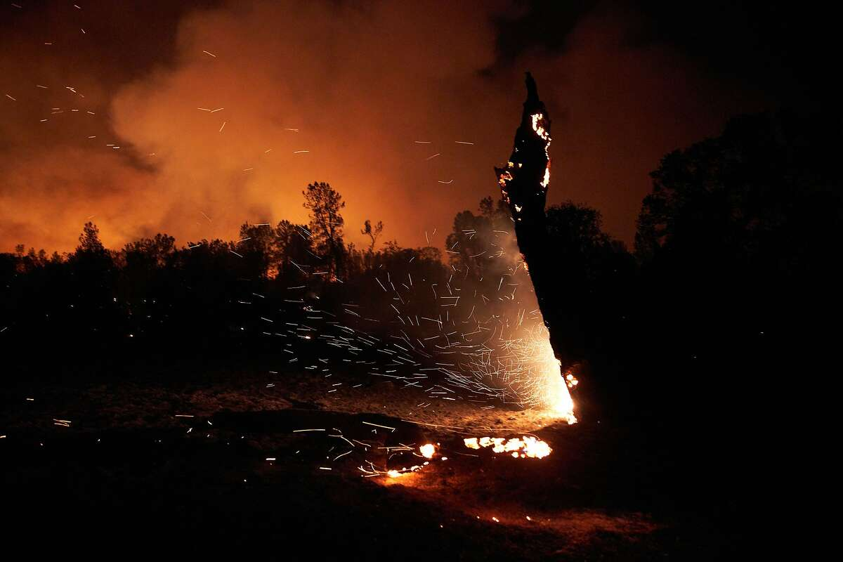 A tree burns from embers in Igo on Sept. 27, at the start of the deadly Zogg Fire in Shasta County. Cal Fire is examining PG&E electrical equipment in investigating the fire cause.