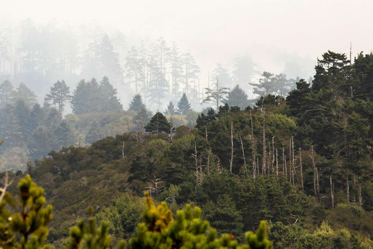 Smoke from the Woodward Fire rises from the trees inside Point Reyes National Seashore. Beneficially, it cleared out underbrush.