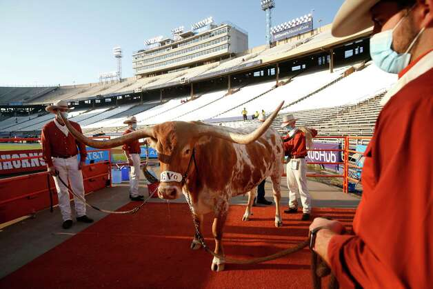 The Silver Spurs handlers settle mascot Bevo into his spot prior to the University of Texas playing Oklahoma in the Red River Showdown NCAA college football game in Dallas, Saturday, Oct. 10, 2020. (AP Photo/Michael Ainsworth) Photo: Michael Ainsworth, Associated Press / Copyright 2020 The Associated Press. All rights reserved.