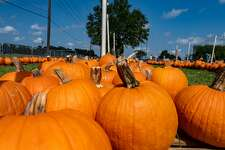 The Pumpkin Patch at Wesley United Methodist Church opened for the season on Sunday at noon. They have a variety of pumpkins and various stations visitors can use for making fall-themed family photos while shopping. The pumpkin patch is open until October 31st, Mondays-Fridays 4pm-8pm, Saturdays 9am-8pm, and Sundays 12pm-8pm. The pumpkin patch is located at the intersection of Major and Folsom Drives in Beaumont. Photo made on October 11, 2020. Fran Ruchalski/The Enterprise