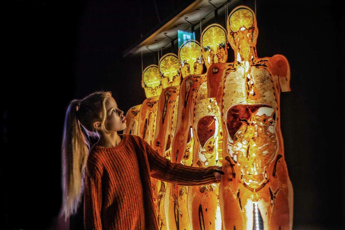 Images from Body Worlds & the Circle of Life, a new exhibit opening at Houston's Museum of Natural Science in Oct. 2020.