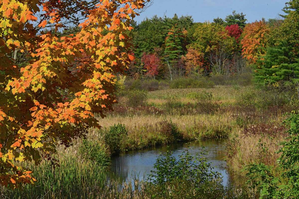 A stream meanders among autumn colors on Monday, Oct. 12, 2020 in Saratoga Springs N.Y. (Lori Van Buren/Times Union)