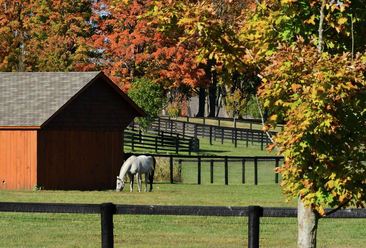 A horse is seen grazing in a pasture on Monday, Oct. 12, 2020 in Saratoga Springs N.Y. (Lori Van Buren/Times Union)