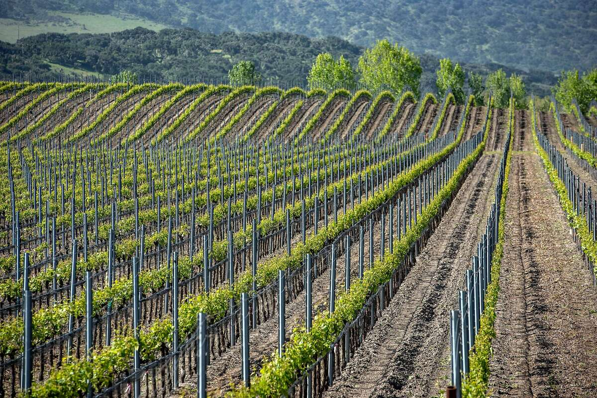 The Brewer-Clifton Vineyard on Monday, April 22, 2019, in Lompoc, Ca.