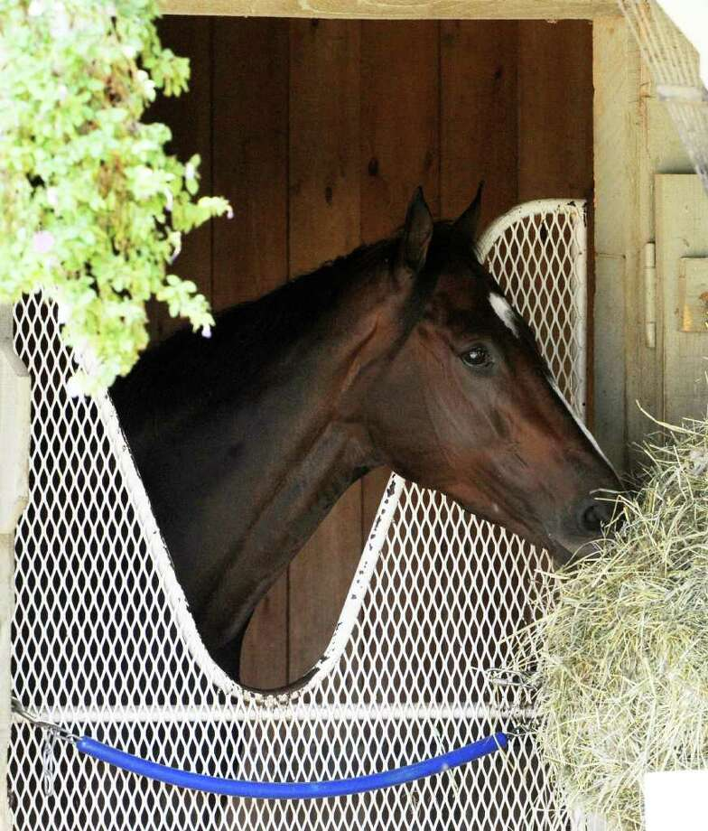 Rachel Alexandra enjoys the quiet of her stall on Monday afternoon at the Oklahoma Training Track at Saratoga Race Course, one day after her tough loss in the Personal Ensign. (Skip Dickstein/Times Union) Photo: Skip Dickstein