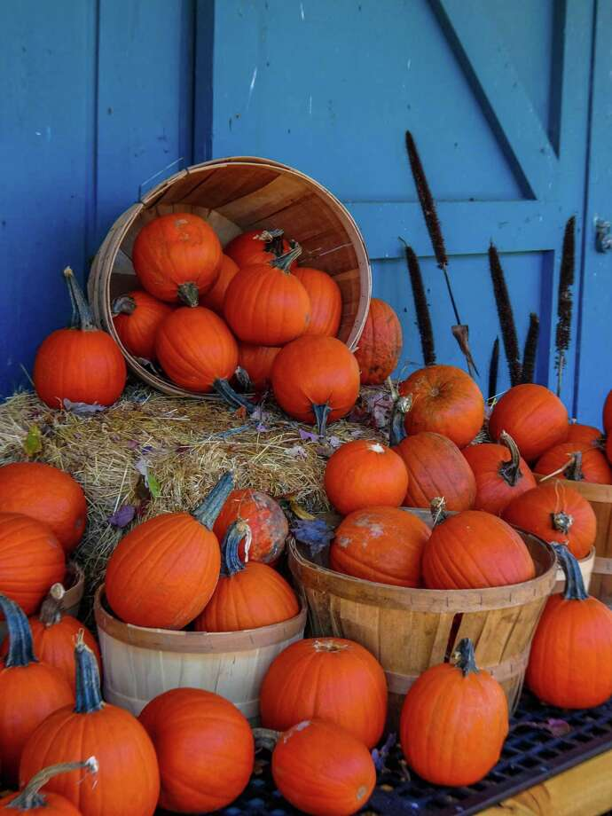 Pumpkins offer a variety of health benefits. Photo: Metro Creative Connection / Contributed Photo
