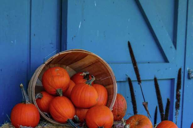 Pumpkins offer a variety of health benefits.