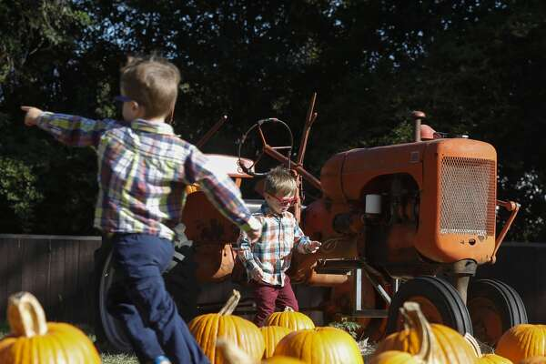 Kai Schechter, right, and his twin brother, Miles, run through a pumpkin patch at 7 Acre Wood, Wednesday, Oct. 7, 2020, in Conroe. The family-owned business on North Frazier Street is ready for the fall with 1,000 pumpkins and will host 'Thrill at the Mill,' a free event for families on Saturday, Oct. 31 from 10:00 a.m. to 3:00 p.m. with hayrides, barrel train rides, face painting, paintball, pumpkins and food.