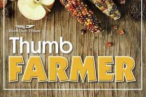 Thumb Farmer - October 2020