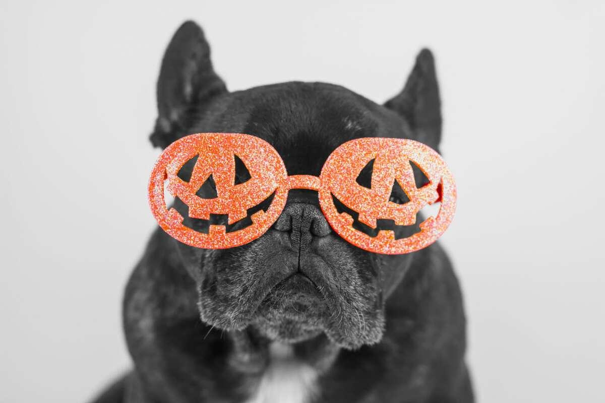 Even pets sometimes enjoy getting into the Halloween spirit.