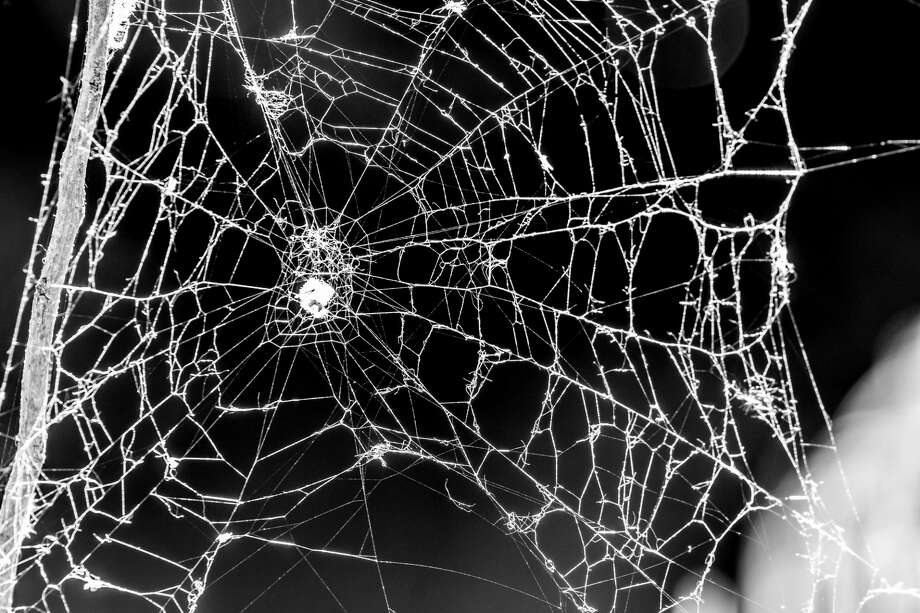 A massive spider web in the woods is getting a reaction on social media. Photo: Marcia Straub/Getty Images / ©Marcia Straub 2018