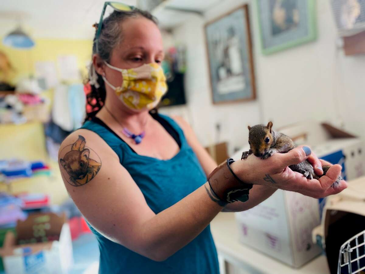 Native Animal Rescue manager Amy Red Feather holds a rescued squirrel.