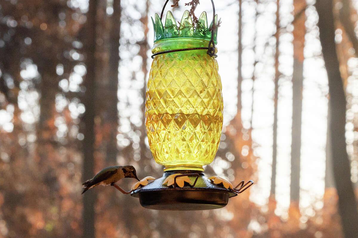 A Boulder Creek hummingbird has flown in for a drink.