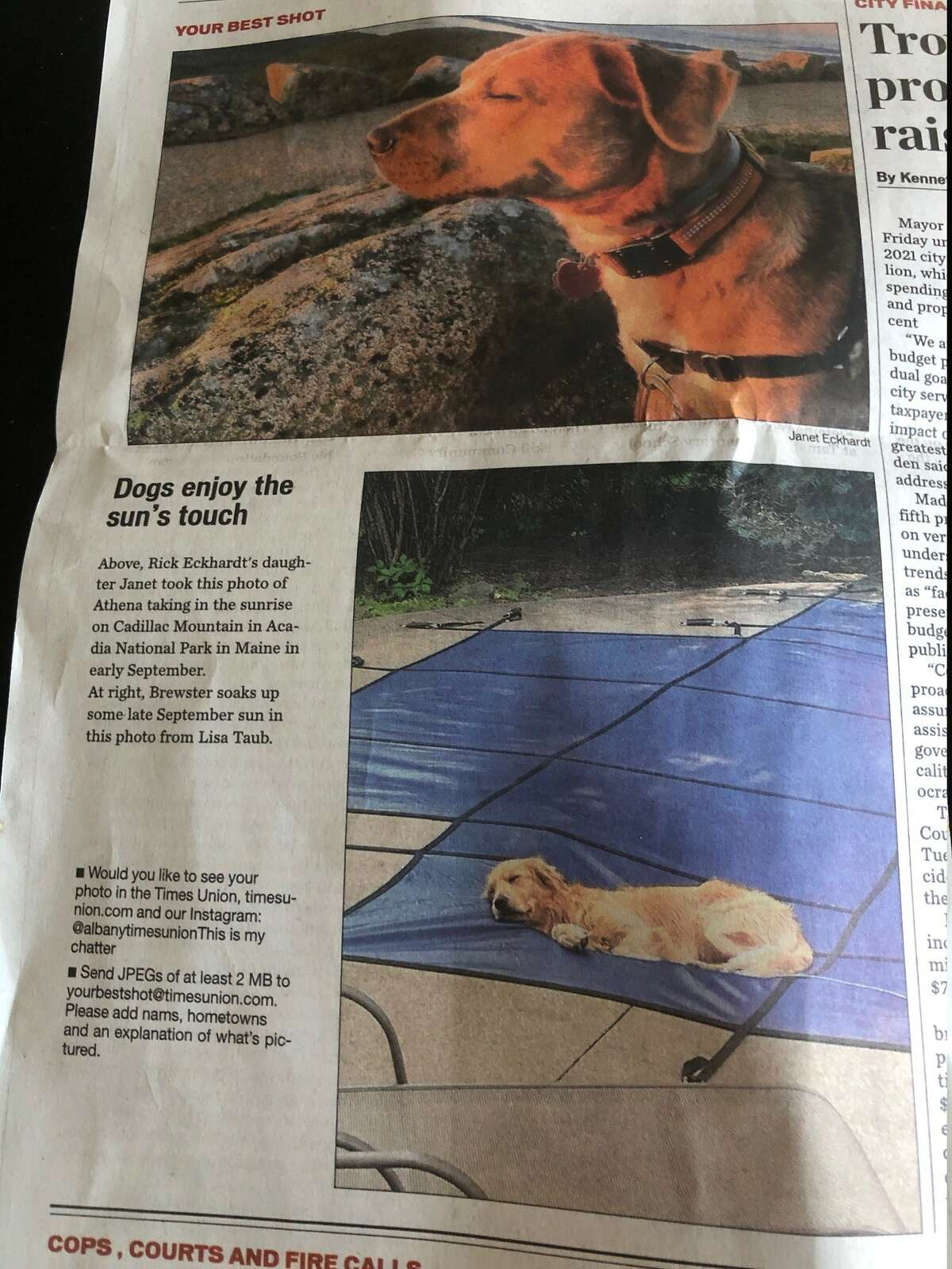 Dogs can't read, right? So then Lola's excursion onto a recently installed pool cover to enjoy the sun -- the very day a photo of another pooch doing the same thing ran in Times Union -- must have been a coincidence. Here are the pictures provided by Mike Jurena and Laura Sherman of Westmere.