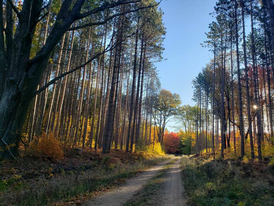 The Udell Hills area in Manistee County made one of my top picks for fall hikes in the county. Photo: Arielle Breen/News Advocate