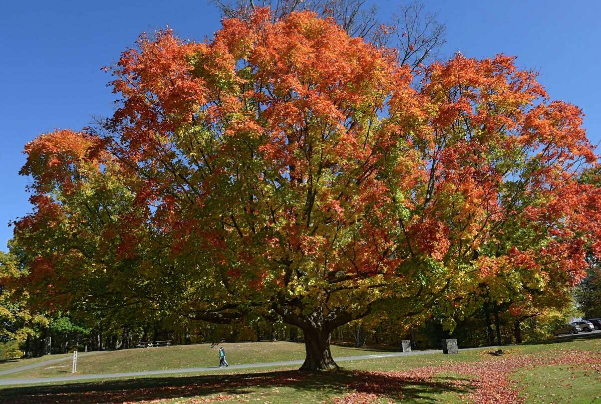 People walk among the fall foliage at John Boyd Thacher State Park in October 2020 in New Scotland. (Lori Van Buren/Times Union)