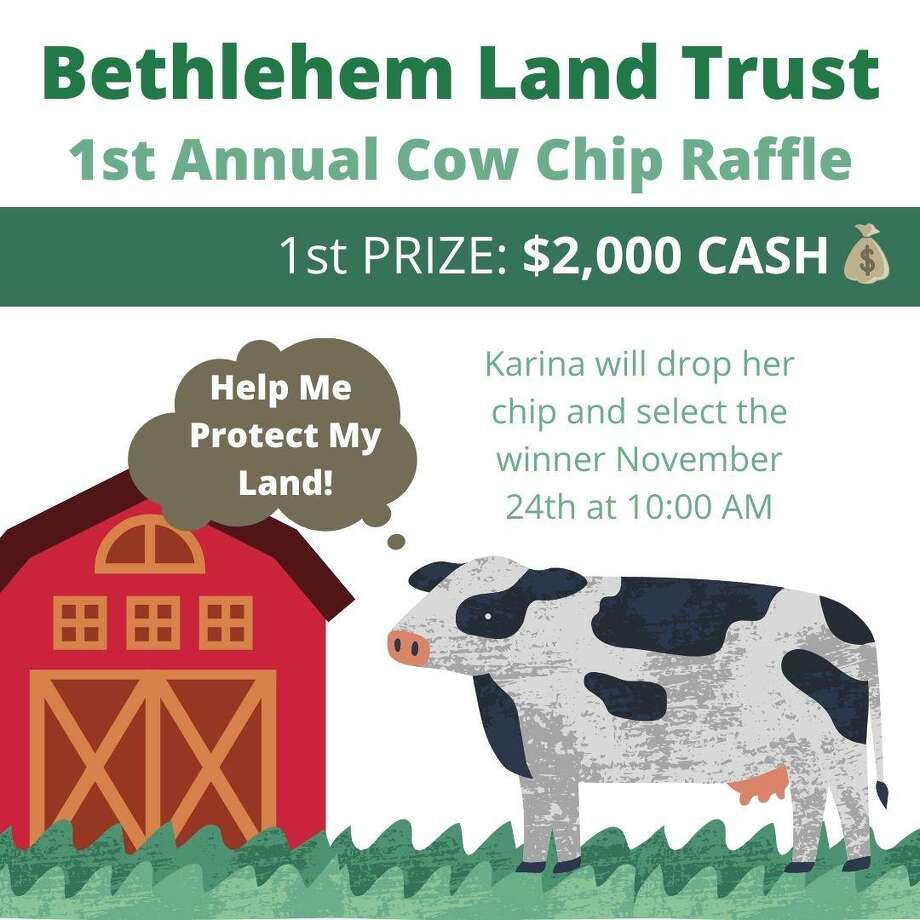 Karina will be the star attraction at the Bethlehem Land Trust's First Annual Cowchip Raffle, to be held at 10:30 a.m., Nov. 24 at the association's flagship property, the Bellamy-Ferriday Preserve, just off the town green. Photo: Contributed Photo
