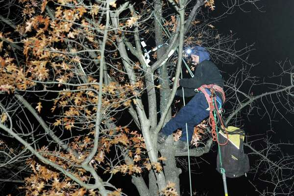 Luis Mais, a worker for the Woodland Tree Care Company of Greenwich, strings holiday lights in a tree on Greenwich Avenue, Greenwich, Conn., Tuesday night, Nov. 28, 2017.