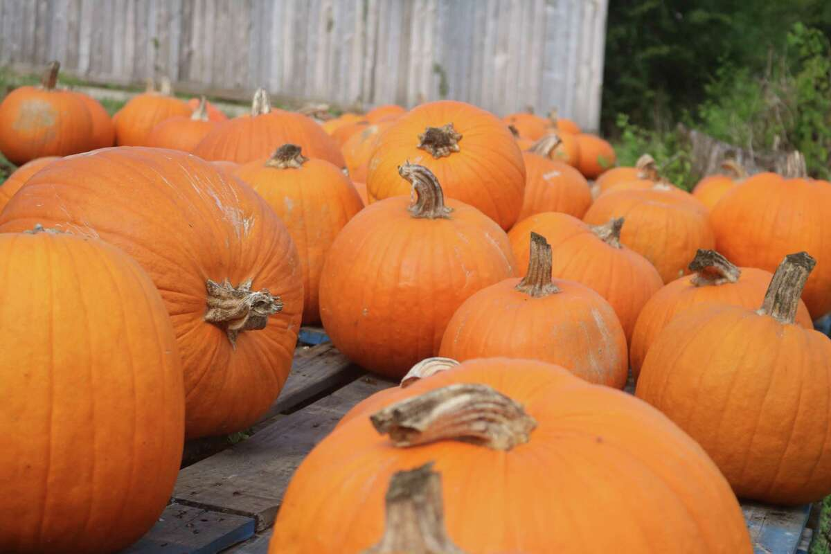 Pumpkins are everywhere in the 200 block of FM 2351.