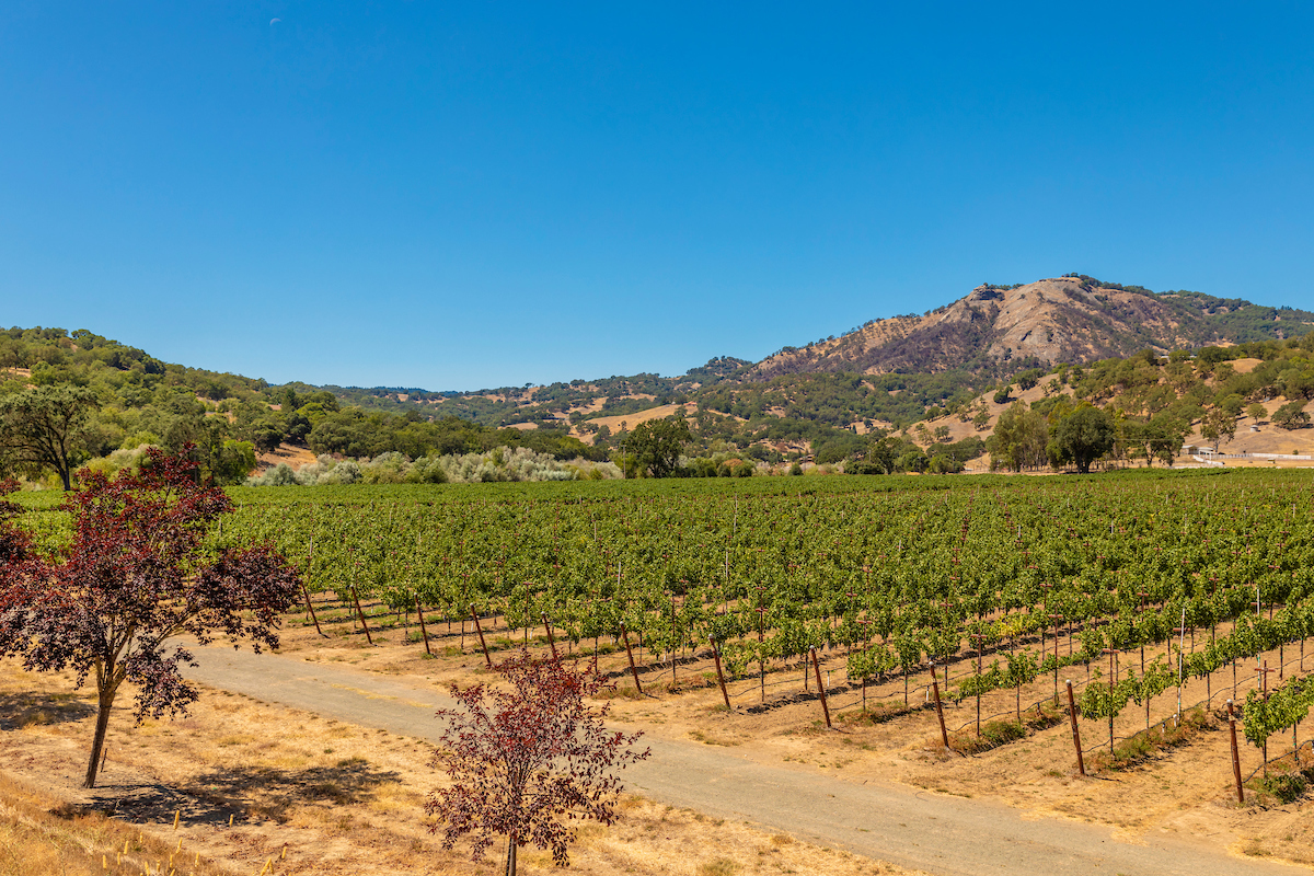 The property also features more than 38 acres of productive Cabernet Sauvignon.