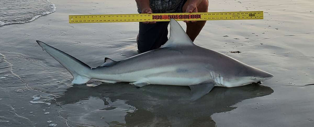 A Corpus Christi woman was left with a painful infection her doctor believes was a flesh-eating bacteria after she went shark fishing at Padre Island National Seashore on Oct. 2.